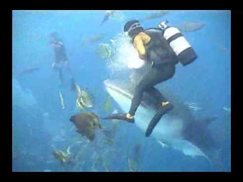 Meet one of Okinawa's Magnificent Underwater Giants